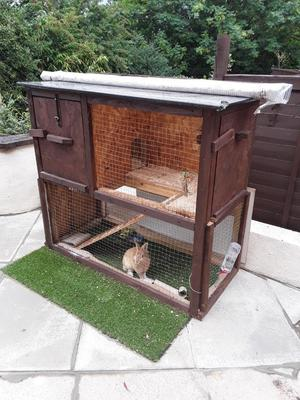 RABBIT FREE TO GOOD HOME Beautiful small rabbit includes cage,free to a good home!