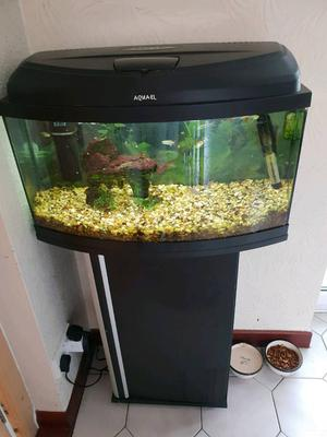 Tropical fish and complete set up