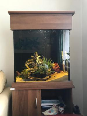 Fish tank which comes with all fish
