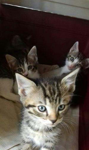 Four gorgeous male and female kittens 7 weeks old.looking for loving new home