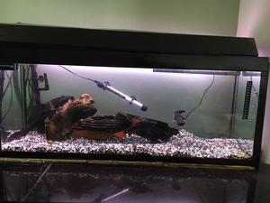 Aquarium with fish *FREE*