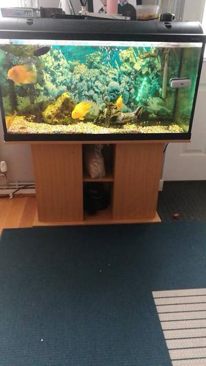 Fish tank, filter,air pump, heater,fishes