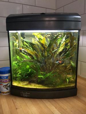Starter Aquarium/fish tank with tropical fish