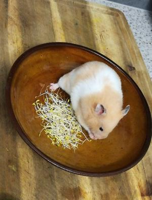 Cute hamster looking for a new home