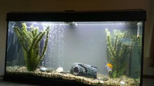 Tropical Fish with tank