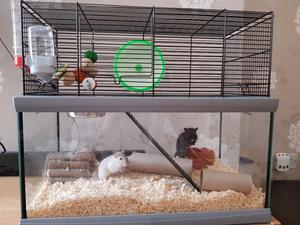 2 male gerbils looking for a new home