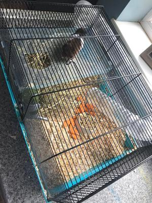Hamster and cage looking for a good home.