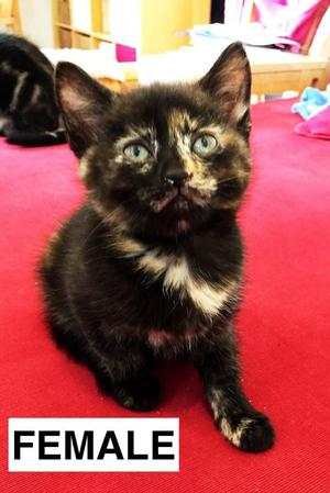Kittens ready for a new home - 2mths