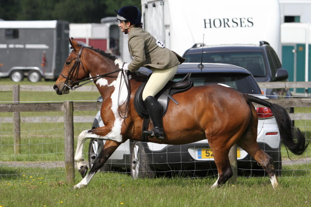 Beautiful all rounder mare for sale