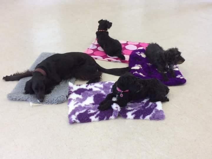 ODEM Dog Training classes in Three Oaks village hall TN35
