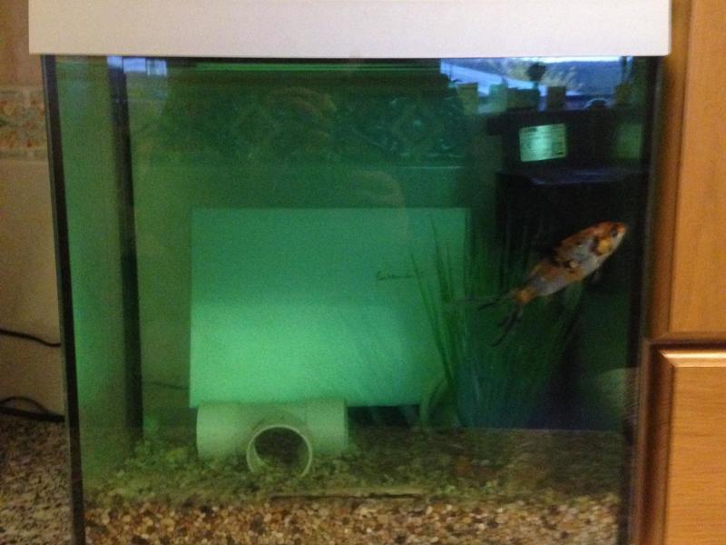 SuperFish Aqua 30 Aquarium with goldfish and kits