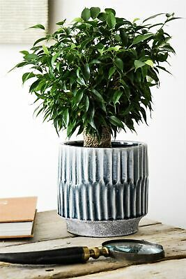 Ivyline Onno Planter Flower Plant Pot Embossed Design in