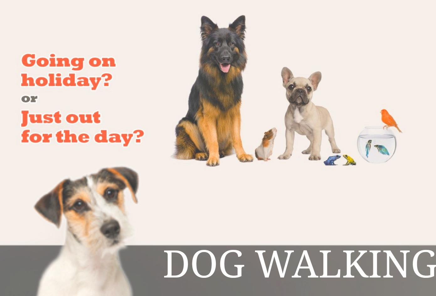 PROFESSIONAL PET SITTING & DOG WALKING