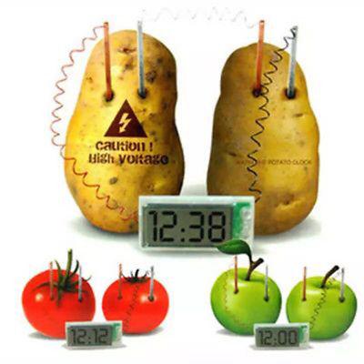 Potato Clock Science Experiment Kit Children Kid Educational