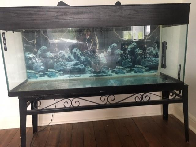 Fish tank on black metal stand and accessories for sale