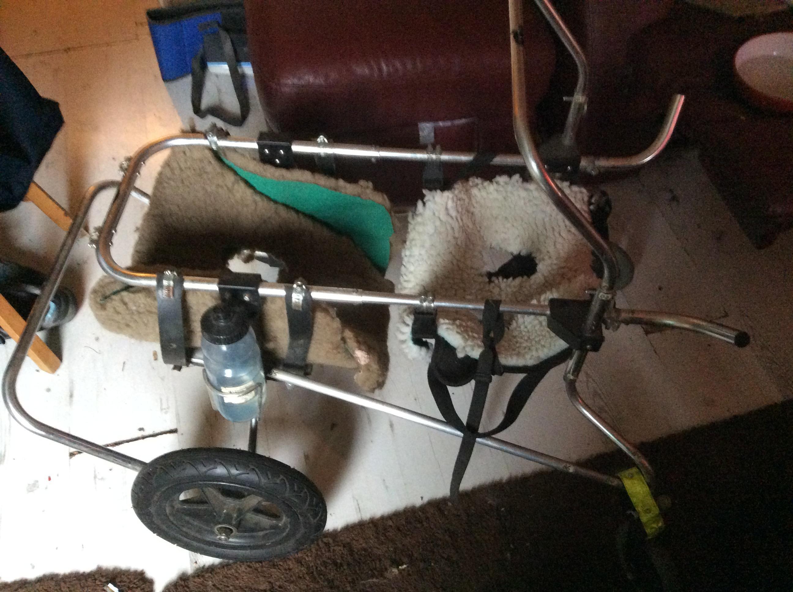 Quad dog wheel chair