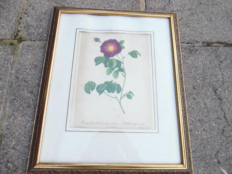 """Framed Picture of """"A Flower"""