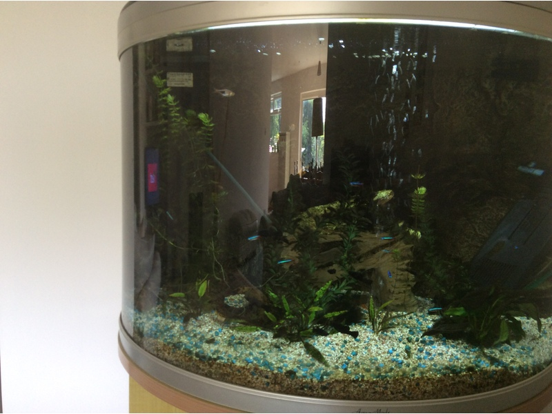 3ft bowfront fish tank on stand with built in filter