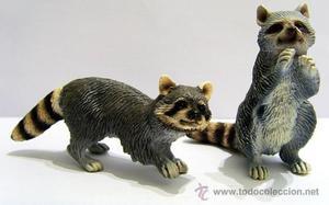 Pareja de mapaches