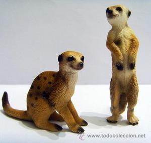 Pareja de suricatos