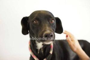Iris en perrera busca hogar en adopcion