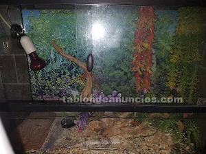 Terrario para reptiles