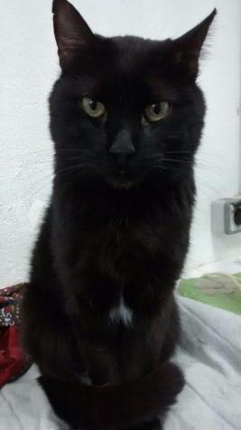 FLOPY gatito 3 años adopción