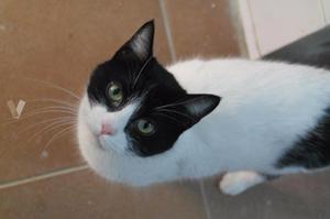 LORETO gatita 1,5 años adopción