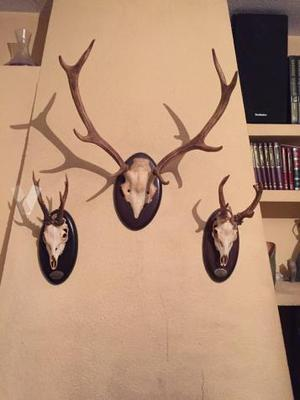 trofeos de caza