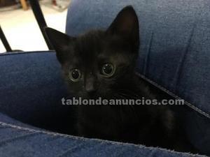 Doy gatitos en adopcion