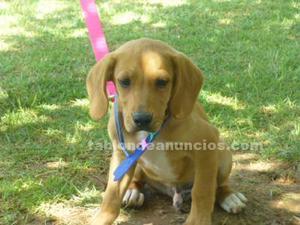 Ian,tierno cachorro,busca hogar en adopcion