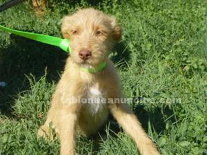 Jairo,cachorrito,busca hogar en adopcion