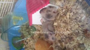 Pequeños hamsters