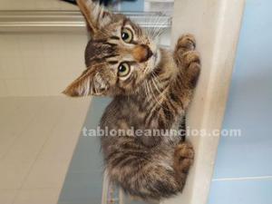 Regalo gatito con 3 mes.