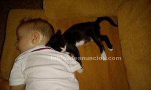 Bebe gato adopcion
