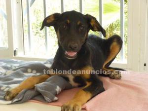 Rosemari cachorra en adopcion responsable
