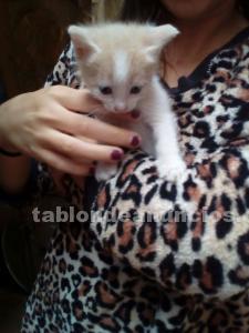 Regalo gatito color canela