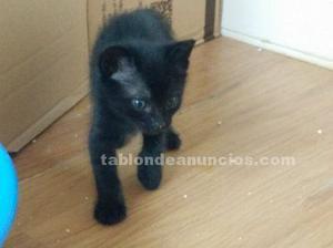 Picky, gatito en adopción