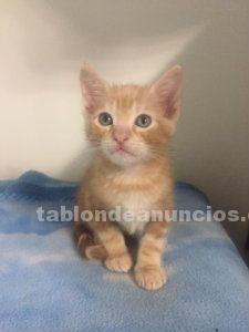 Mayo (nac ) gato en adopción