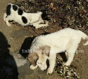 Cachorritas en adopcion