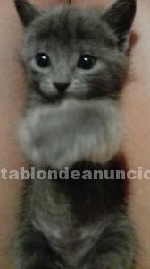 Regalo gatitos pequeños