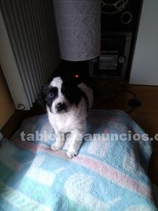 Cachorro 2 meses