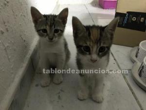 Gatitos 2 meses, buscan hogar