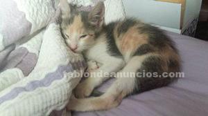 Ervi (nacimiento junio ) gatita en adopción solo en