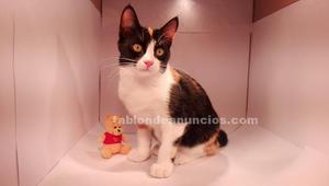 Regalo 2 gatitas-gato en adopción gratis