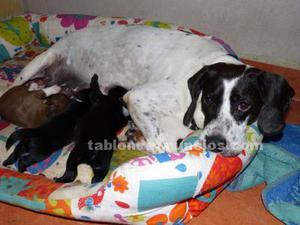 Perro en adopción - charlotte y cachorros