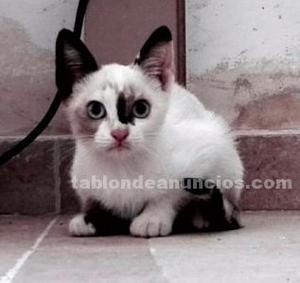 Regalo gatito pequeño