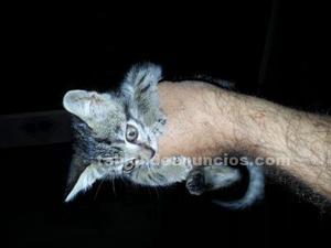 Regalo precioso gatito de un mes