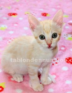 Caramelo de gatito en adopción