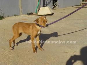 Skye,cachorro en perrera:en adopcion